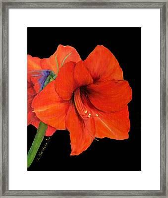 Framed Print featuring the painting Amaryillis Iv by Sandra Nardone