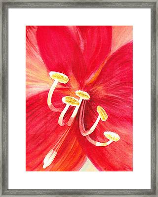Amaryllis Flower Framed Print by Irina Sztukowski