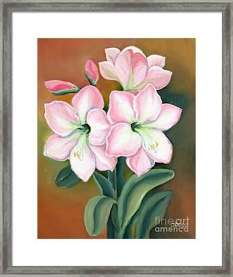 Amaryllis For Ladies Framed Print