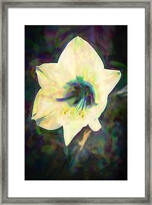 Amaryllis Framed Print by Priya Ghose