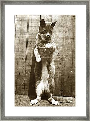 Framed Print featuring the photograph Amateur Feline Fotografer Cat With A Box Camera  Historical Photo 1900 by California Views Mr Pat Hathaway Archives