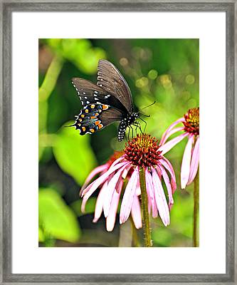 Amazing Butterfly Framed Print by Marty Koch