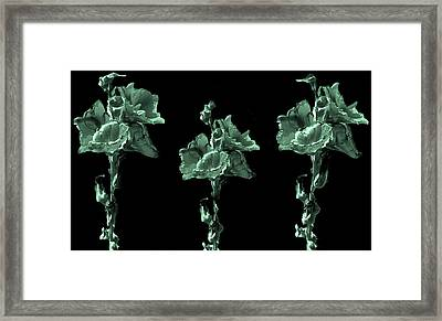 Amazing Flowers Framed Print by Manjot Singh Sachdeva