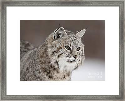 Amazing Gaze Framed Print