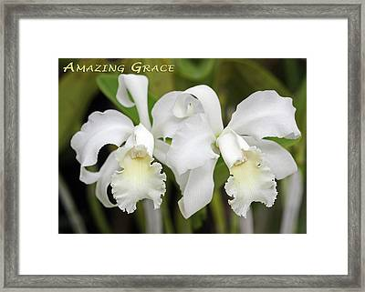 Amazing Grace Framed Print by Dawn Currie