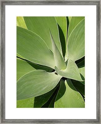 Amazing Natural Art Framed Print by Karen Nicholson