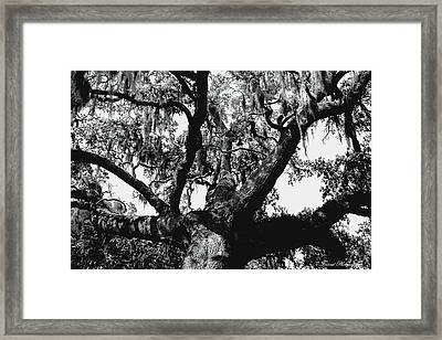 Amazing Oak Tree Framed Print