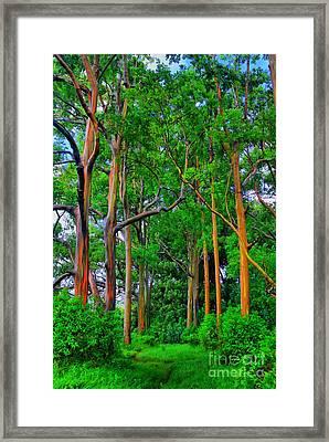 Amazing Rainbow Eucalyptus Framed Print by DJ Florek