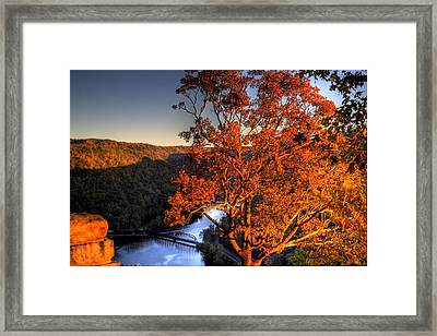 Amazing Tree At Overlook Framed Print