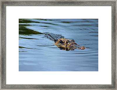 Framed Print featuring the photograph Amazon Alligator by Henry Kowalski