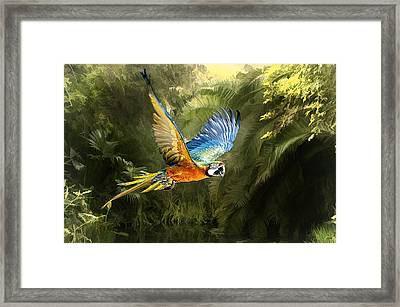 Framed Print featuring the photograph Amazon Beauty by Brian Tarr