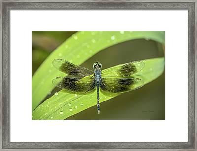 Amazon Dragonfly Framed Print
