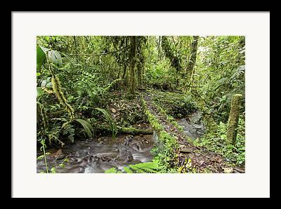 Cloudforest Framed Prints