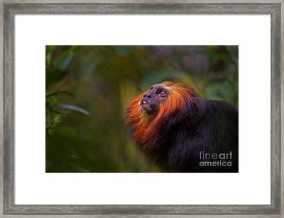 Amazonian Echoes Framed Print