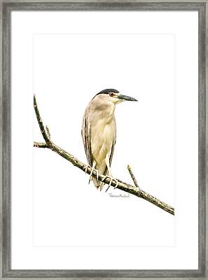 Amazonian Heron Framed Print