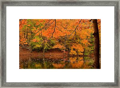 Amber Afternoon Framed Print by Lourry Legarde