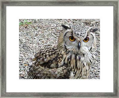 Amber Eyes Owl Framed Print