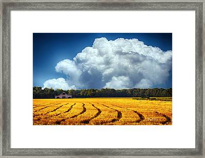 Amber Fields Framed Print