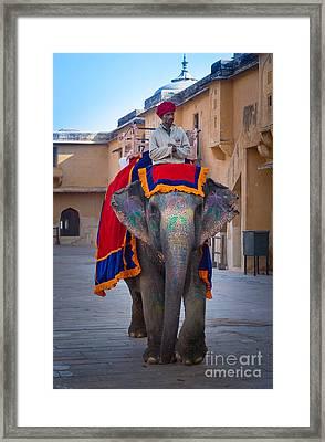 Amber Fort Elephant Framed Print