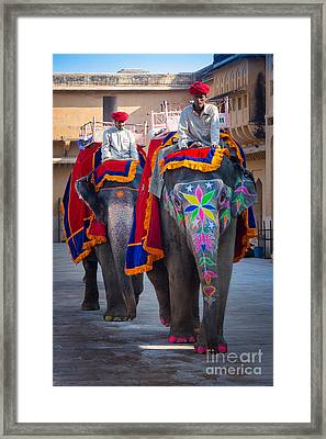 Amber Fort Elephants Framed Print by Inge Johnsson
