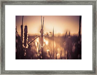 Framed Print featuring the photograph Amber Glow by Jason Naudi Photography