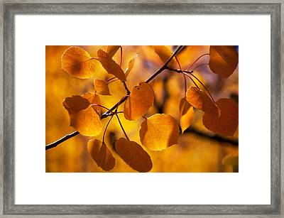 Amber Leaves Framed Print by The Forests Edge Photography - Diane Sandoval
