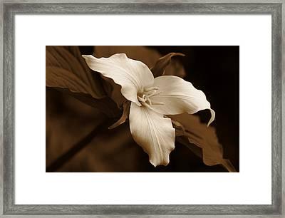Amber Trillium Wild Flower Framed Print by Jennie Marie Schell