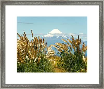 Amber Waves Of Osorno Framed Print