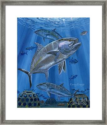 Amberjack In0029 Framed Print by Carey Chen