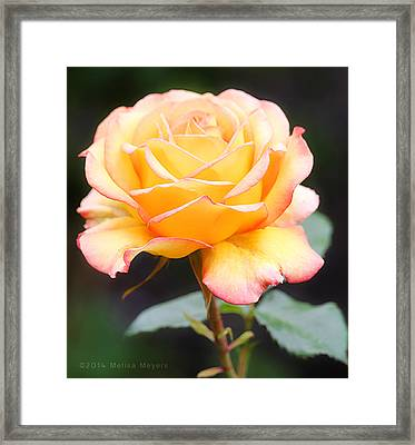 Ambiance Framed Print by Melisa Meyers