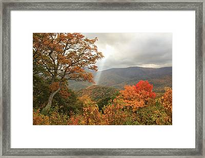 Ambience Framed Print by Doug McPherson