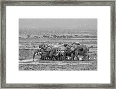 Amboseli Ellies Framed Print by June Jacobsen