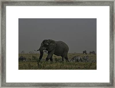 Framed Print featuring the photograph Amboseli Giant by Gary Hall