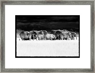 Amboseli Herd With Egret Framed Print by Mike Gaudaur