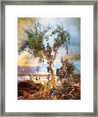 Framed Print featuring the photograph Amboy Shoe Tree by Steve Benefiel