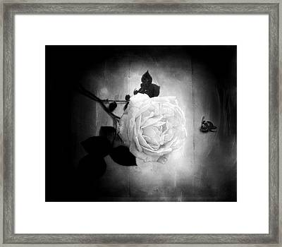 Ambridge English Rose Framed Print