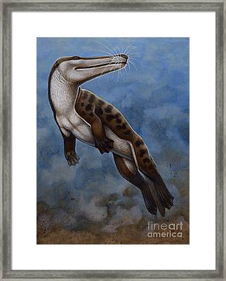 Ambulocetus Natans, An Early Cetacean Framed Print by H. Kyoht Luterman