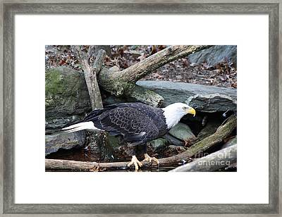 Framed Print featuring the photograph America by John Telfer