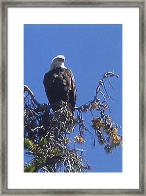 America The Beautiful Framed Print by Jewel Hengen