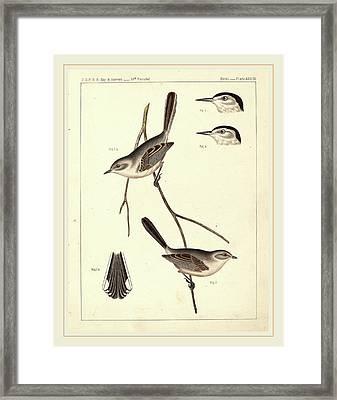 American 19th Century Framed Print