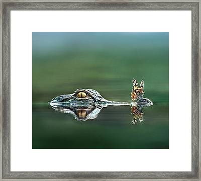 American Alligator And Butterfly Framed Print