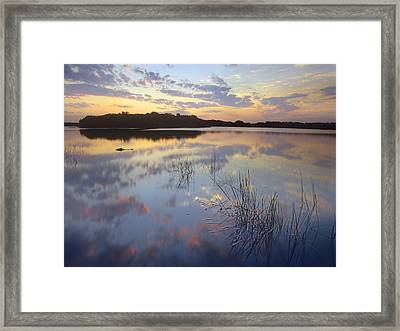 American Alligator Everglades Np Florida Framed Print by Tim Fitzharris