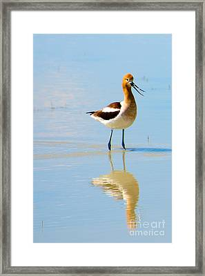 Framed Print featuring the photograph American Avocet by Vinnie Oakes