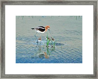 Framed Print featuring the photograph American Avocet With Young by Lula Adams