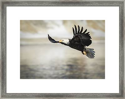 American Bald Eagle 2015-22 Framed Print