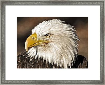 American Bald Eagle 33 Framed Print by Marty Koch