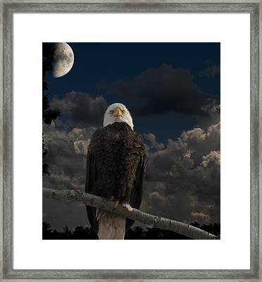 American Bald Eagle Composite Framed Print by Thomas Young
