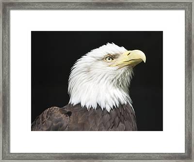 American Bald Eagle Profile Framed Print