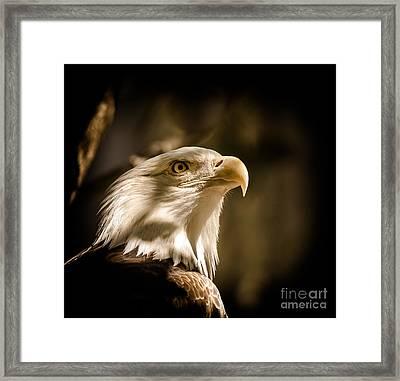 American Bald Eagle Framed Print by Robert Frederick