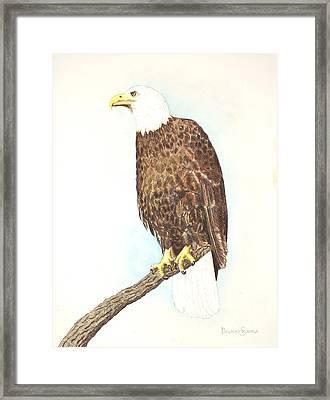 American Bald Eagle Watching Framed Print by Dag Sla